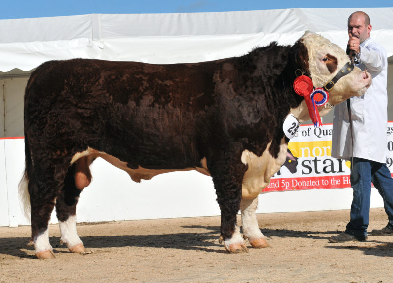 Hereford Cattle Sale Hfd 6/10/12